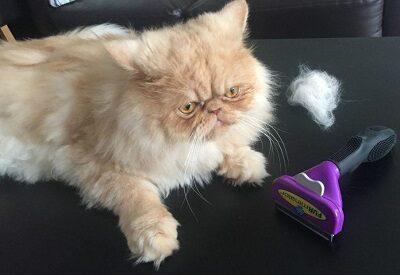 Фурминатор для кошек и котов: что это, как выбрать | фото и видео