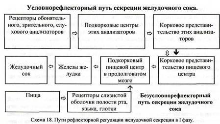 Железы смешанной секреции: что это такое, таблица, основные функции, причины заболеваний, симптоматика, диагностические мероприятия, способы лечения и профилактика