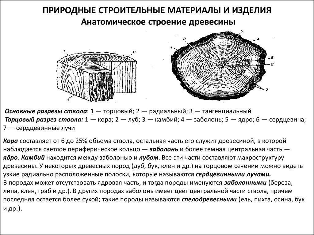 Что такое древесина? виды древесины :: syl.ru