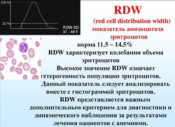 Rdw в анализе крови: причины повышения и понижения (sd и cv), расшифровка результата