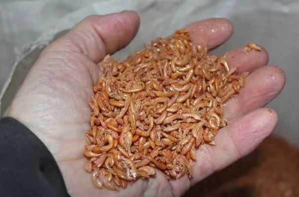 Цисты простейших в организме человека. обнаружены цисты простейших в кале. что это означает и как лечится