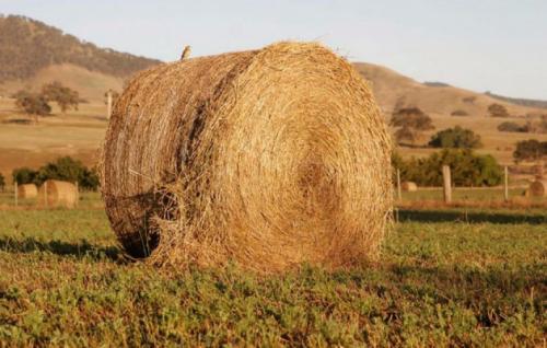 Сено солома - в чем разница? применение сена и соломы в огороде | своими руками - как сделать самому