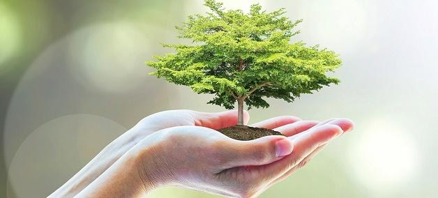 Окружающая среда — википедия. что такое окружающая среда