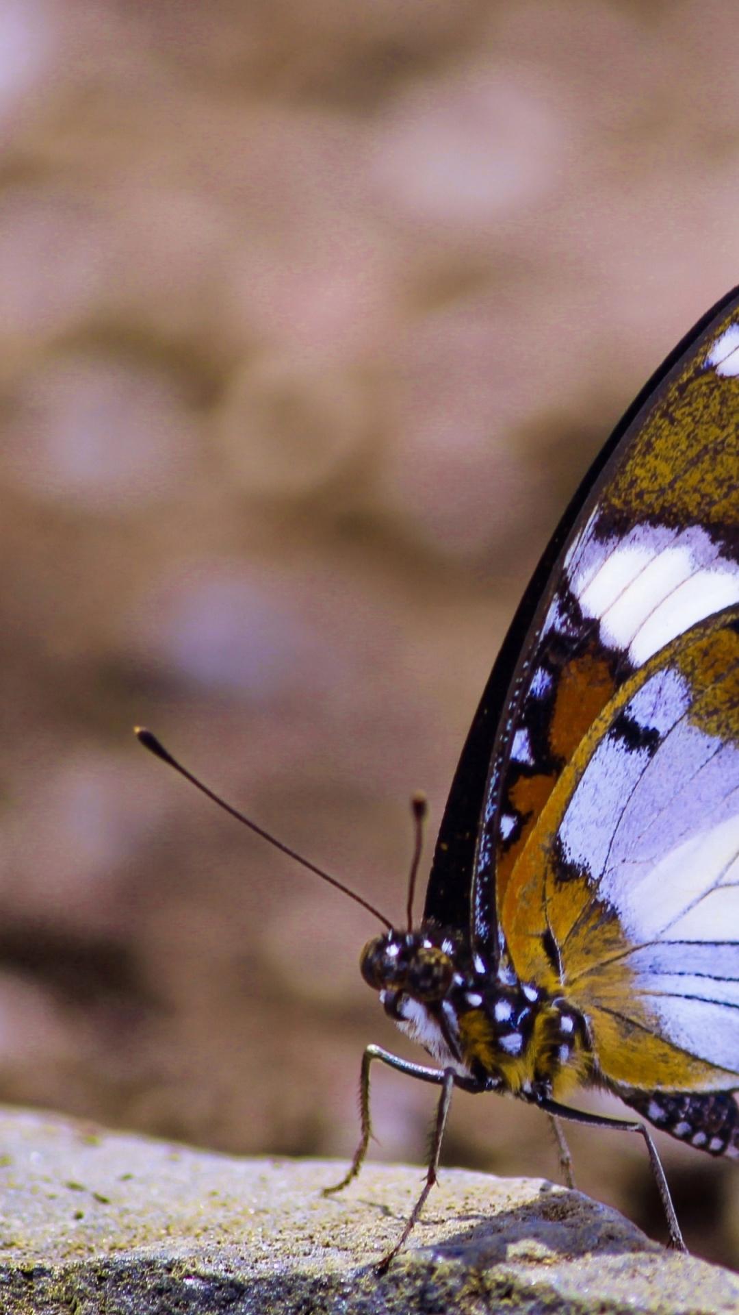 11 фактов офильме «мотылёк» | синемафия