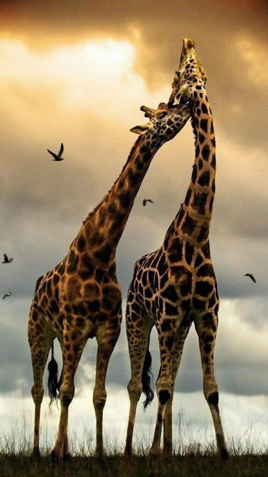 Животные — википедия переиздание // wiki 2