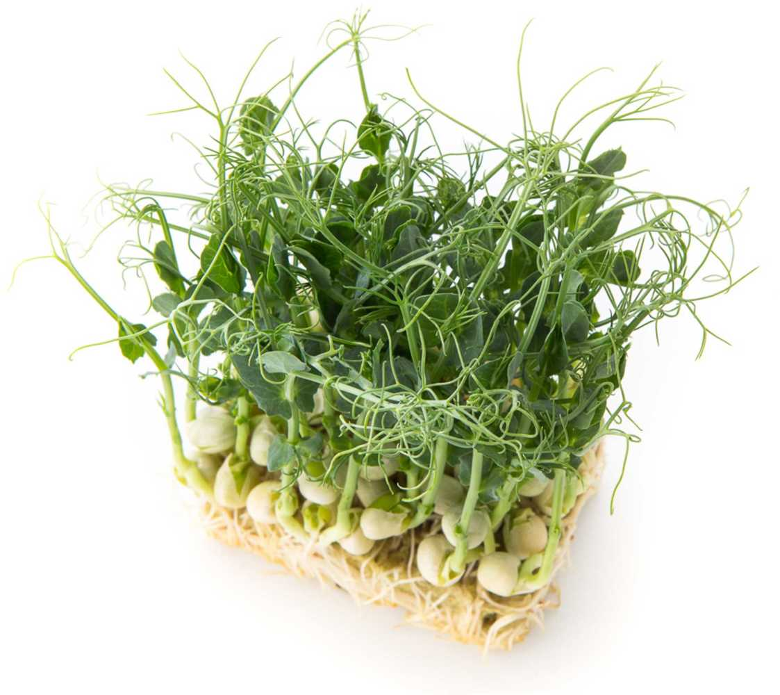 Что такое микрозелень, где её используют и можно ли вырастить самостоятельно?