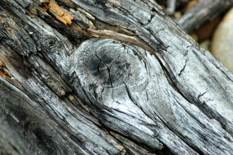 Пороки древесины (19 фото): что это такое и какие особенно распространены? виды дефектов строения. что еще относится к основным порокам? описание и гост