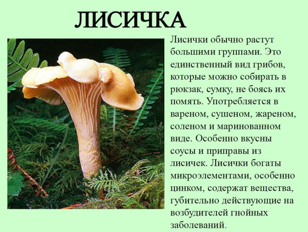 Что такое грибы - узнай что такое