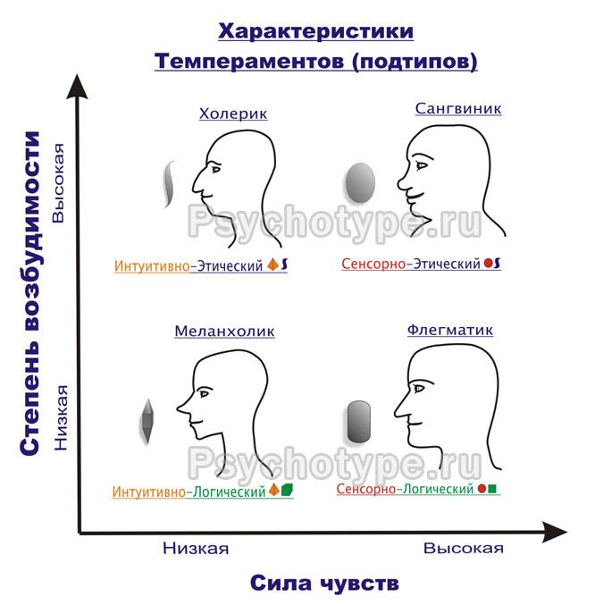 Кто вы по типу темперамента: полная характеристика и особенности по возрастам