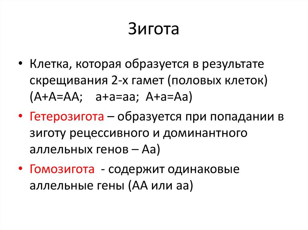 Зиготы – это... определение, стадии развития :: syl.ru