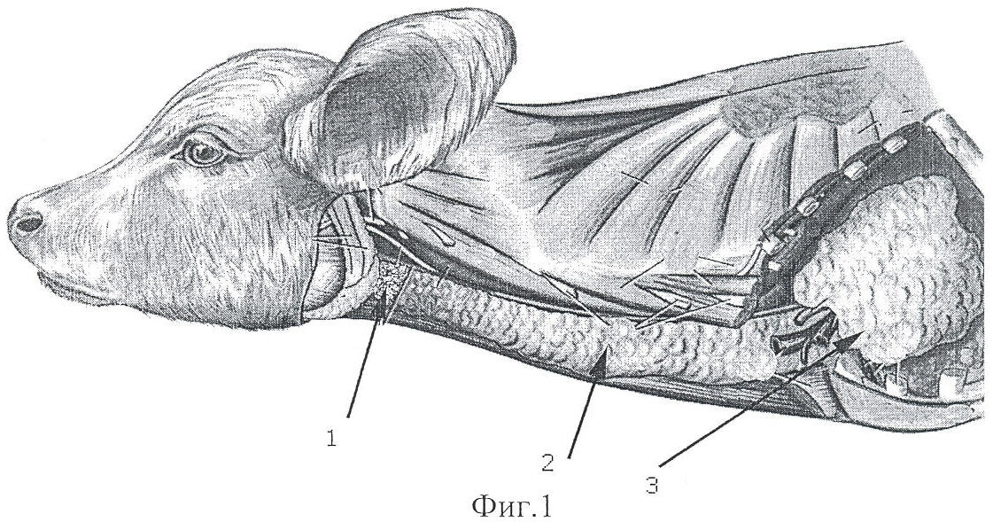 Закупорка и воспаление зоба у кур, причины, лечение