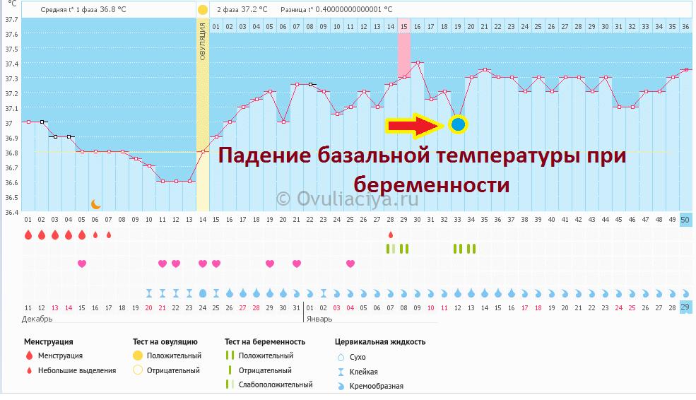 Базальная температура - что это такое, измерение бт, график