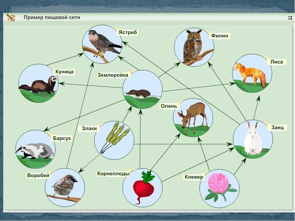 Пищевая цепь — википедия. что такое пищевая цепь