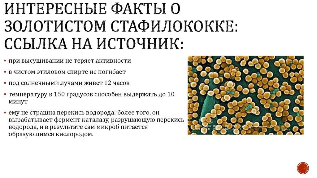 Золотистый стафилококк. симптомы, причины и лечение стафилококка. заболевания