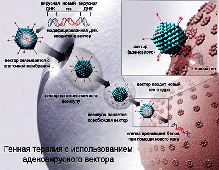 Таргетная терапия рака: группы препаратов, молекулярные мишени, показания и побочные эффекты