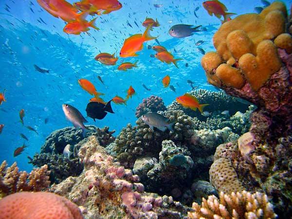 Большой барьерный риф — фото, история открытия, описание, как добраться туристу
