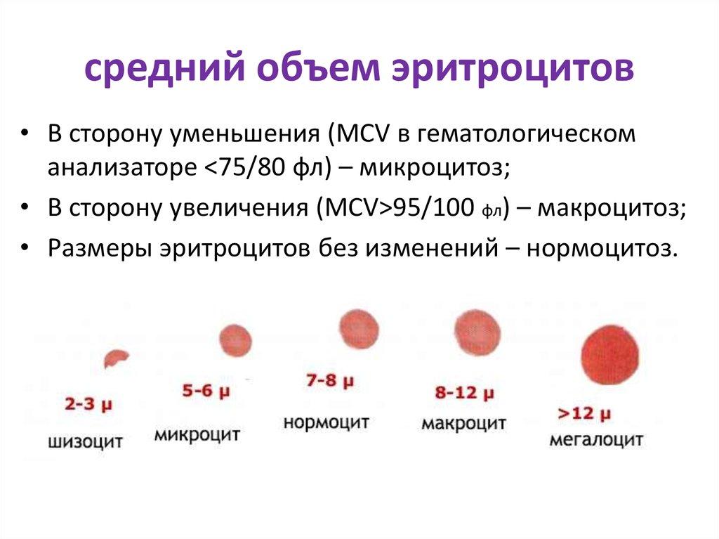 Повышенное содержание ретикулоцитов в анализе крови