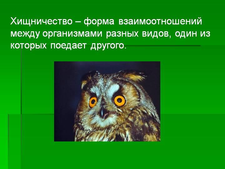 Хищничество • ru.knowledgr.com