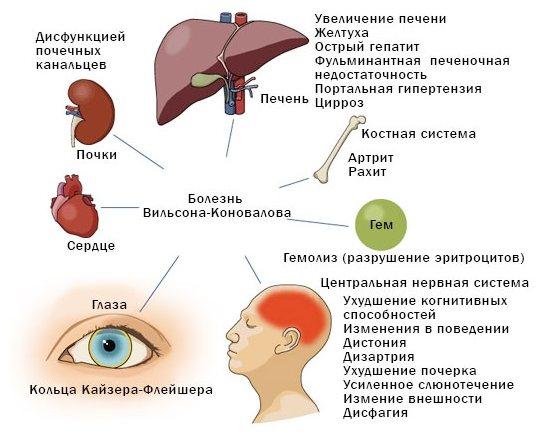 Билирубин и билирубинемия: что это такое