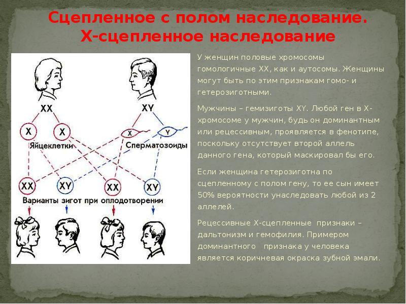 Наследственность — википедия с видео // wiki 2