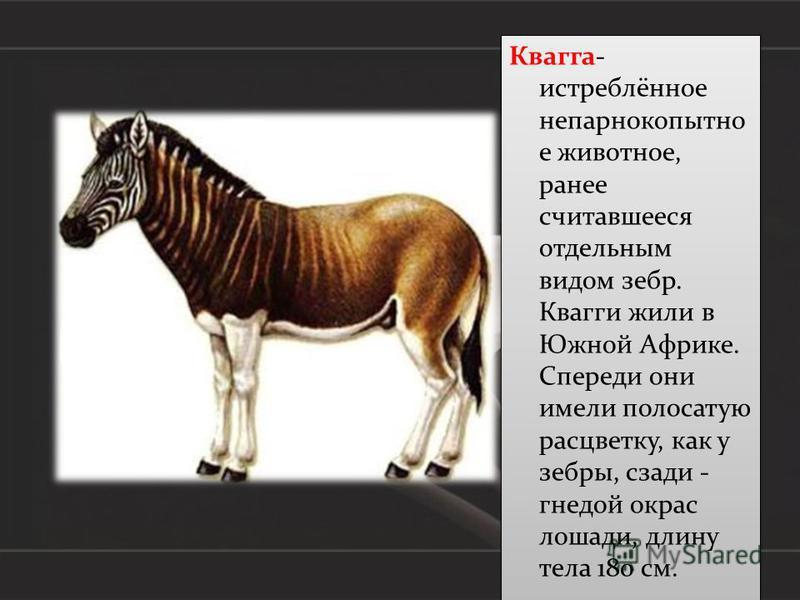 Красная книга россии — википедия. что такое красная книга россии