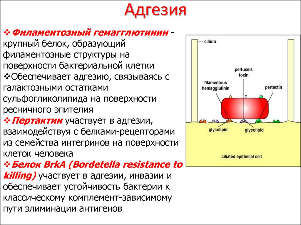 Адгезионные свойства строительных и отделочных материалов как и чем измеряются - самстрой - строительство, дизайн, архитектура.