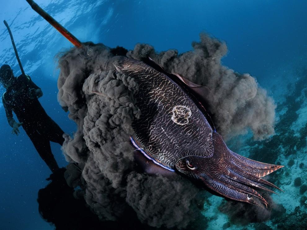 Что такое каракатица