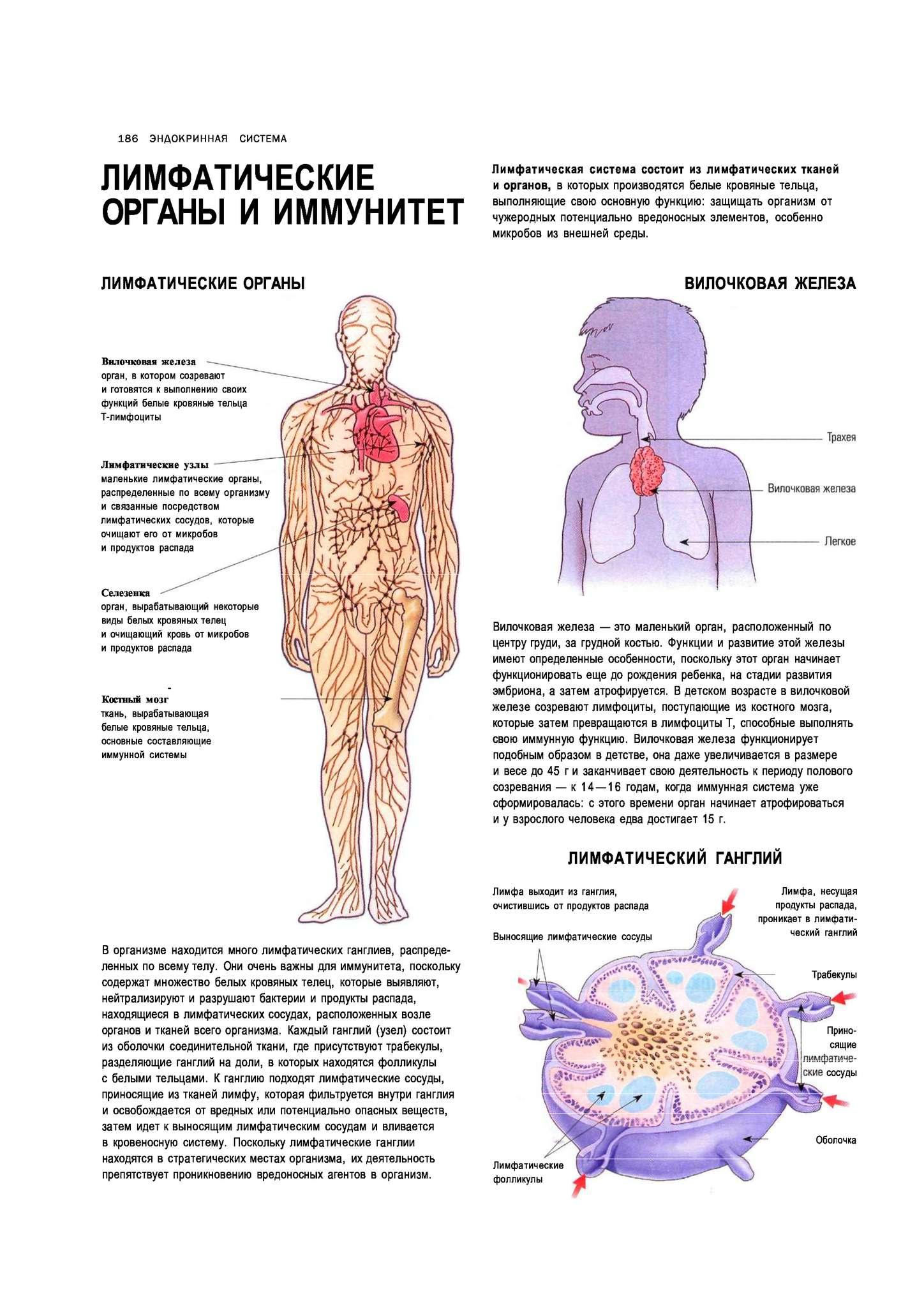 «действительно ли иммунные клетки имеют целью защищать нас или нам просто выгодно так думать?»