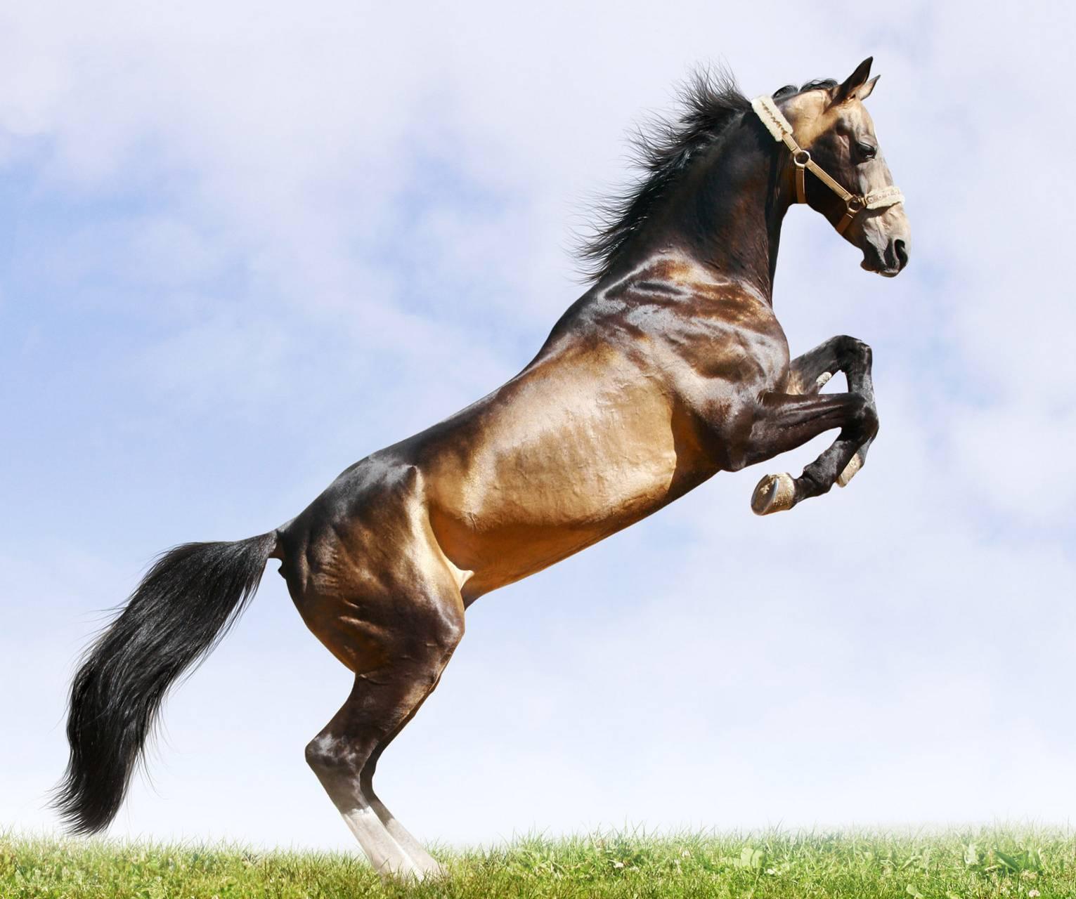 Загадка: где встречается такое, что конь через коня перепрыгивает?
