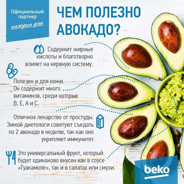 "Авокадо (avocado). описание, виды и уход за авокадо | флористика на ""добро есть!"""