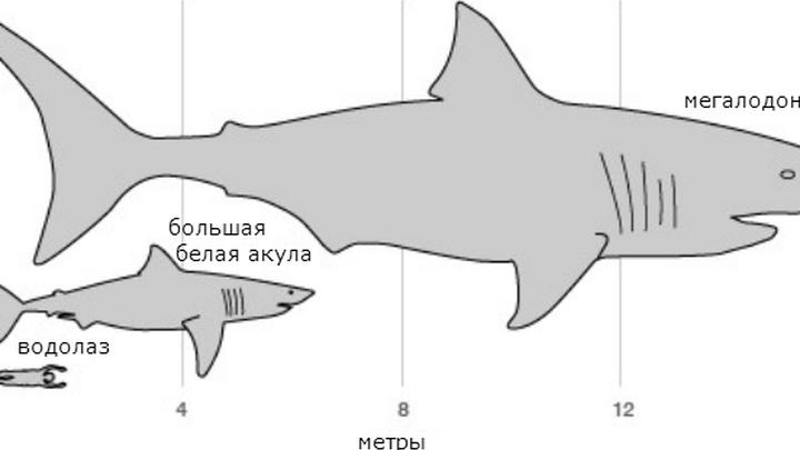 Мегалодон: акула монстр из прошлого