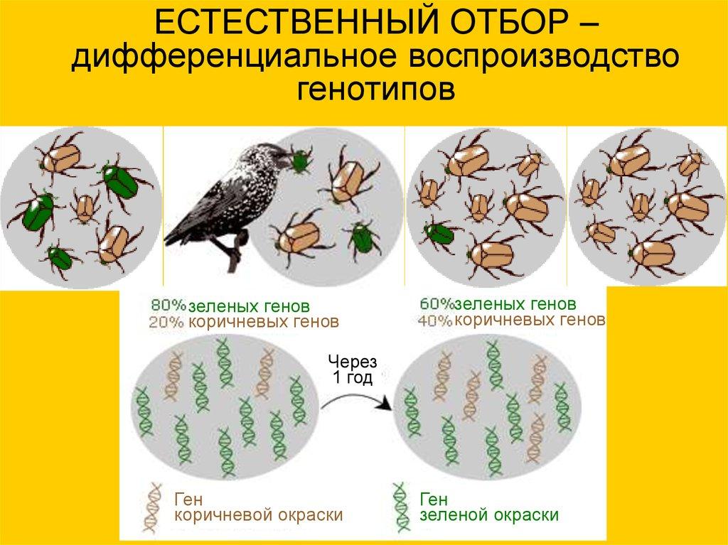 Естественный отбор