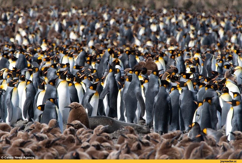 Популяция — википедия. что такое популяция