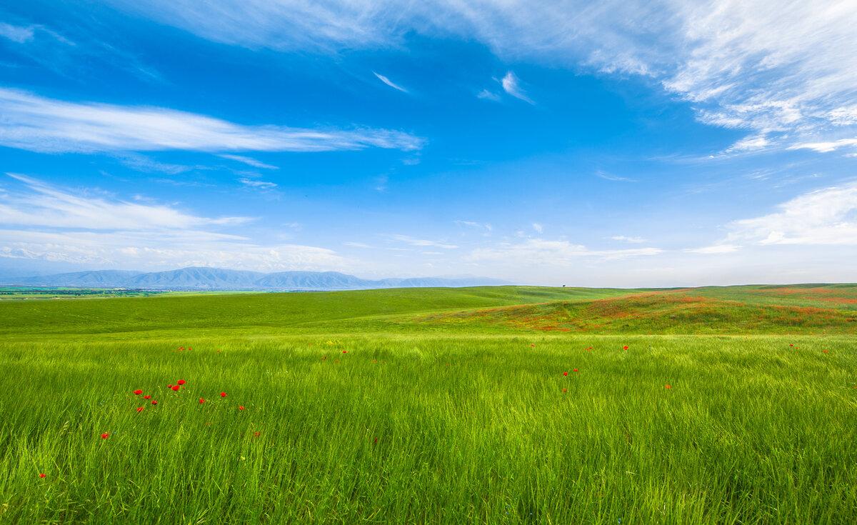 Природная зона степи россии: где находится, карта, климат, почвы, флора и фауна