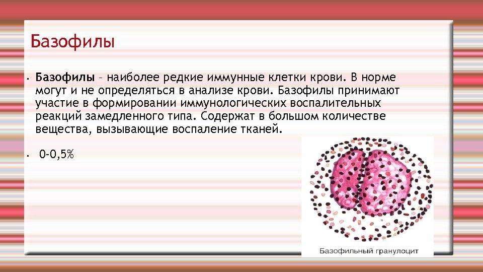 Пониженные базофилы в крови: причины и лечение у взрослых