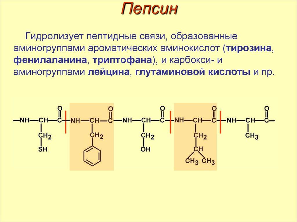 Пепсин — инструкция по применению, описание, вопросы по препарату