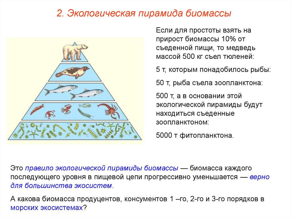 1.что такое экологическая пирамида?какие процессы в сообществе она отражает? 2.в чем отличие пирамид численности и энергии? 3.почему пирамида численност