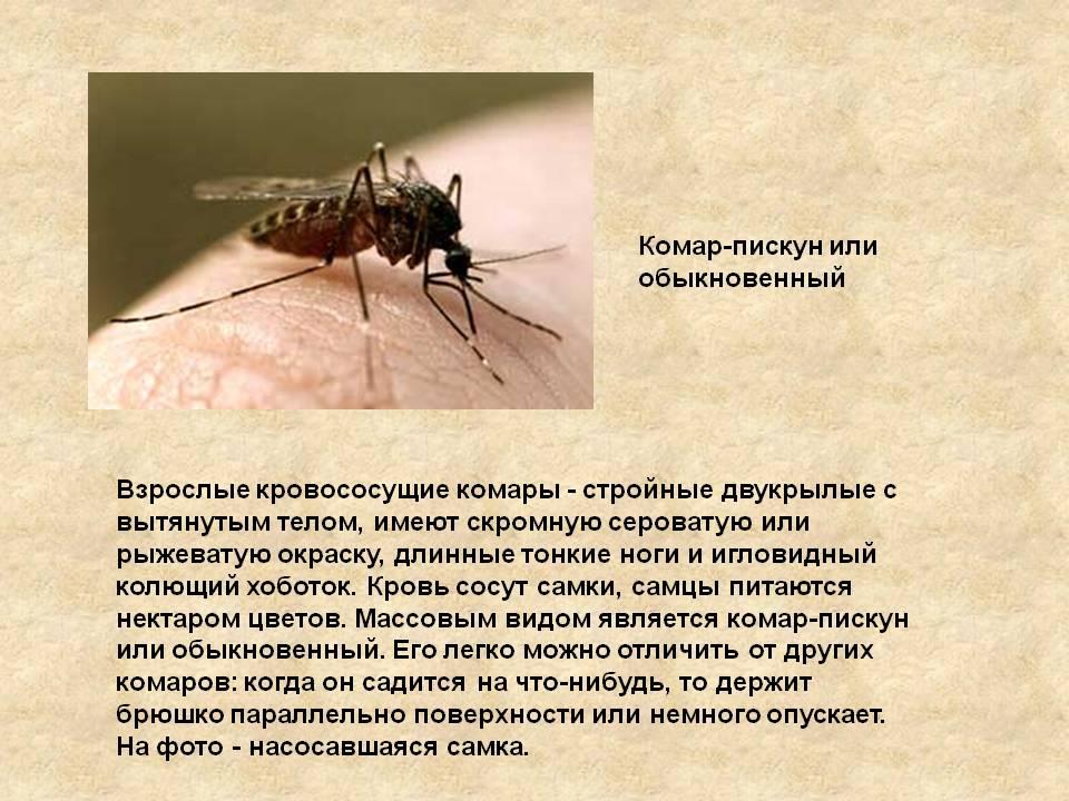 Кровососущие комары