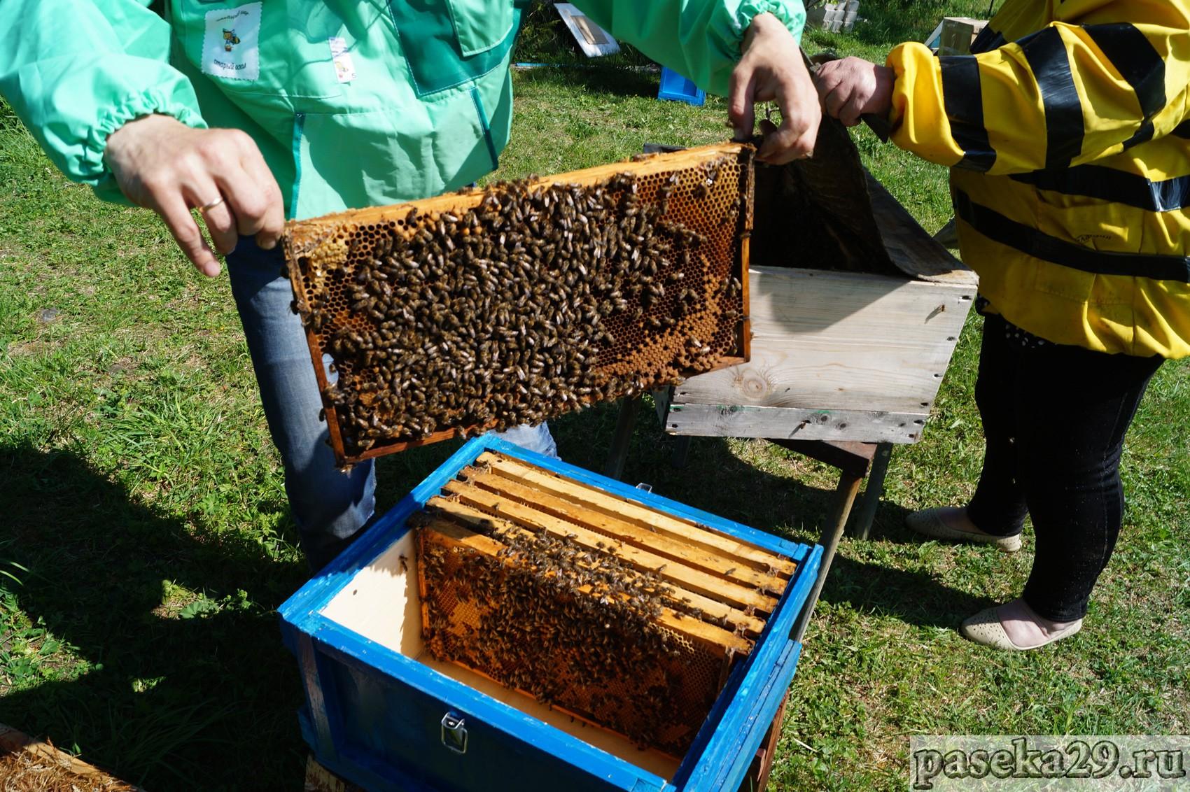 Пчеловодство для начинающих: фото, видео, что купить для пасеки