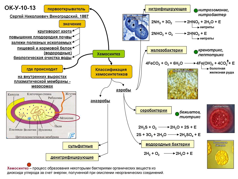 Хемосинтез в биологии - определение, виды, основные процессы, значение - помощник для школьников спринт-олимпик.ру
