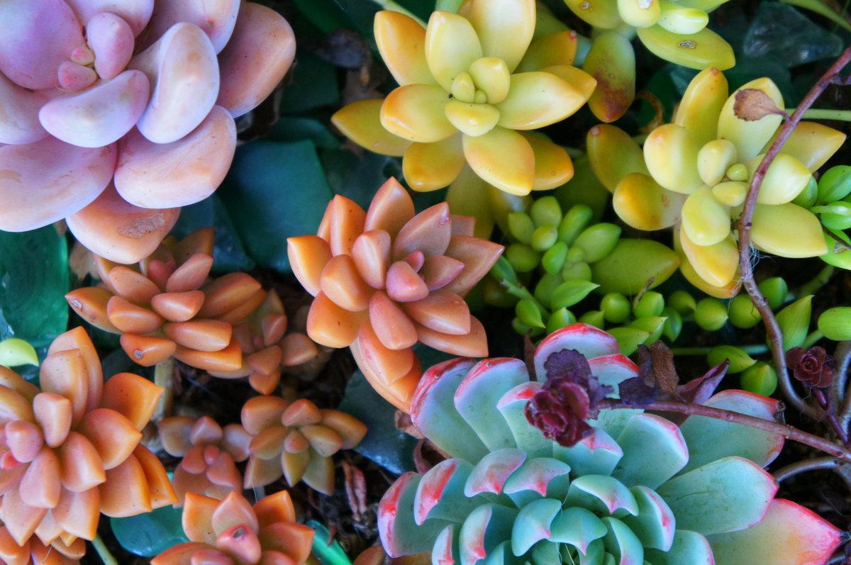 Суккуленты: виды, что это за растение, как ухаживать в домашних условиях, посадка