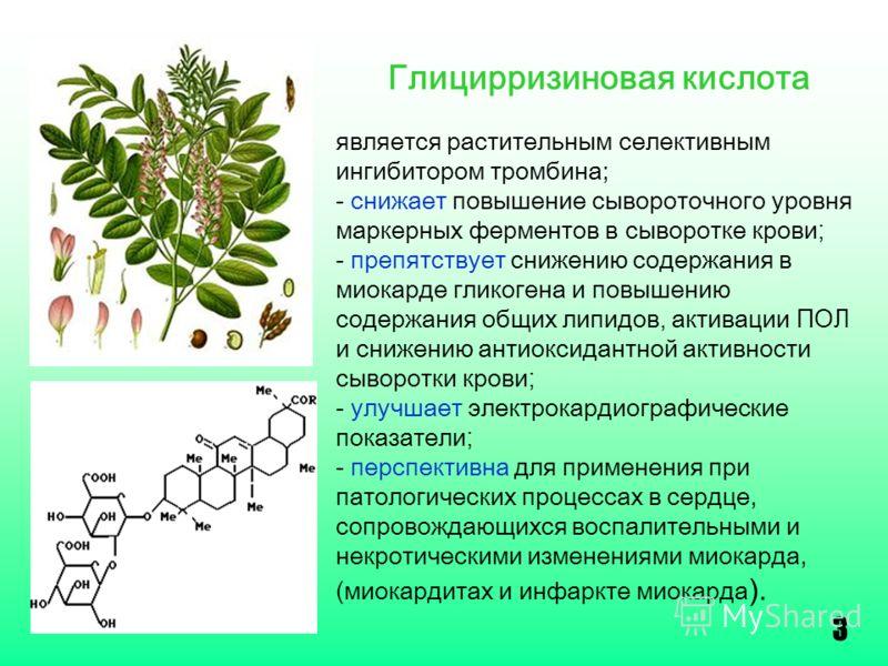 Полезные свойства сапонинов - народная медицина