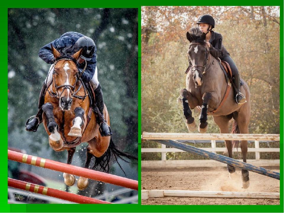 Виды конного спорта: список и описание | мои лошадки