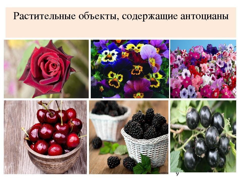 Антоцианы: вся сила темного цвета фруктов и овощей