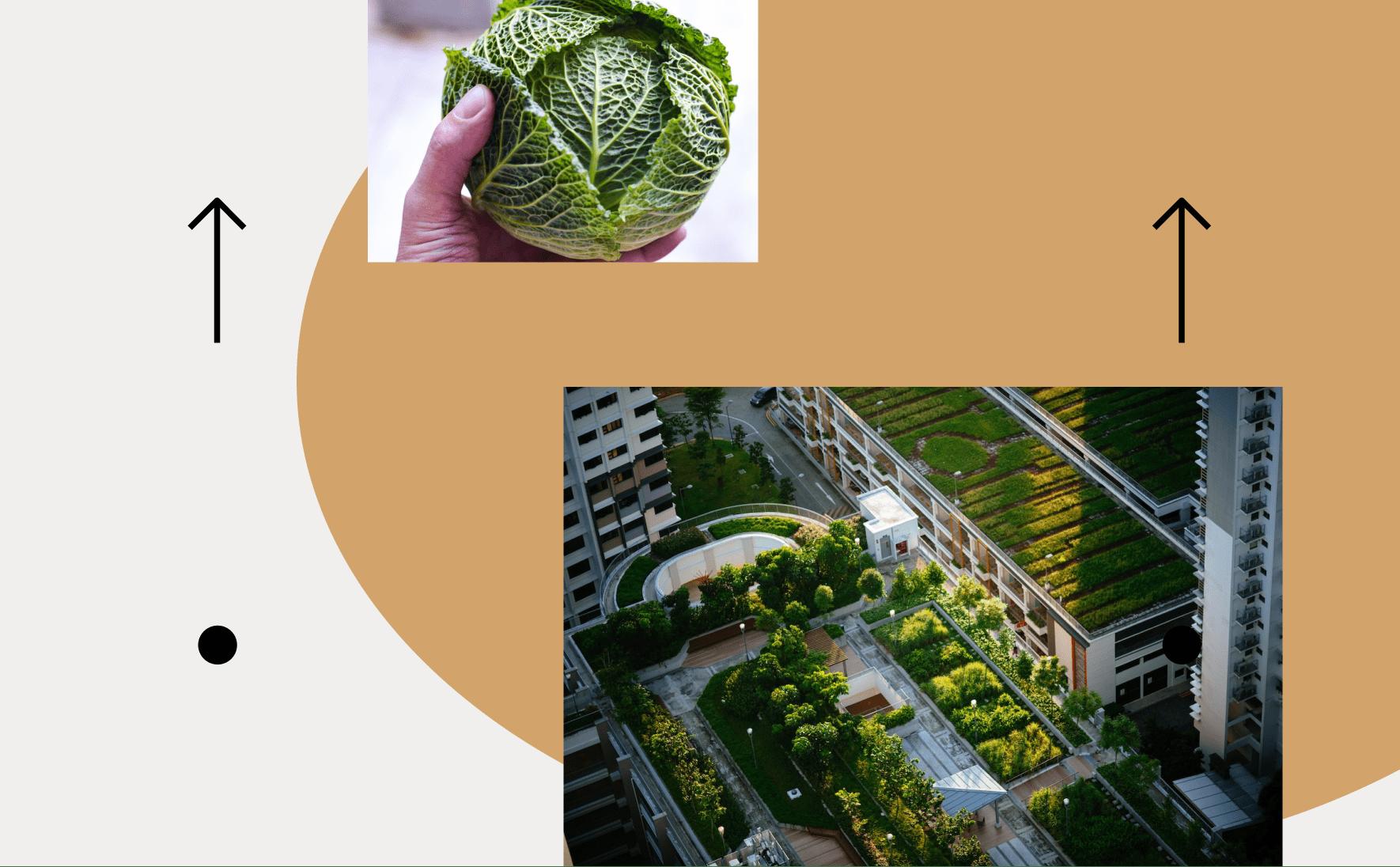 Что такое сады?