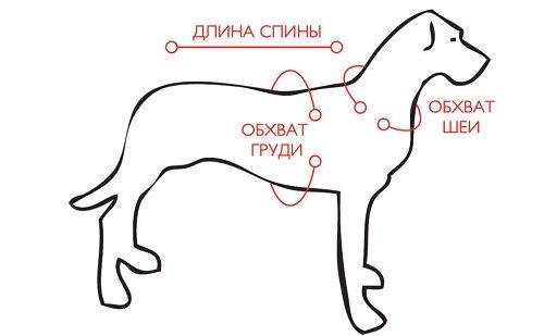 Как выбрать и сделать шлейку для миниатюрных собак