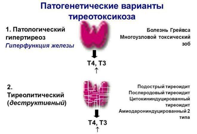 Тиреотоксикоз - что это такое? симптомы и лечение щитовидной железы