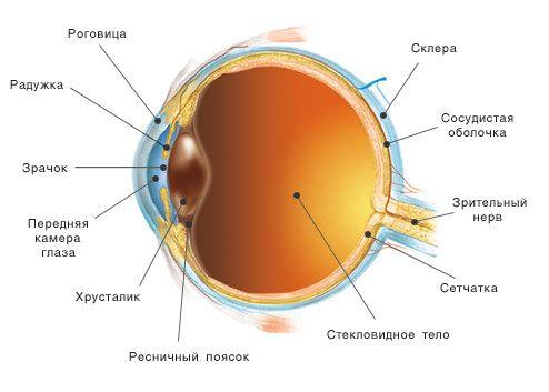 Радужка глаза (радужная оболочка): строение, функции, лечение