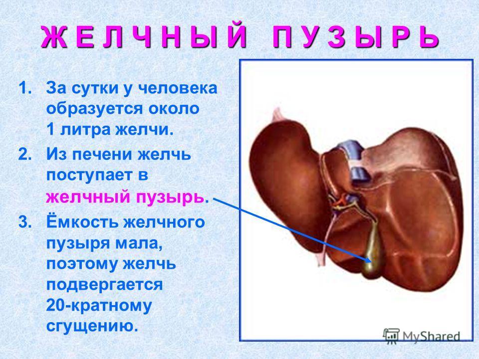 6 продуктов для оттока желчи и лечения желчного пузыря