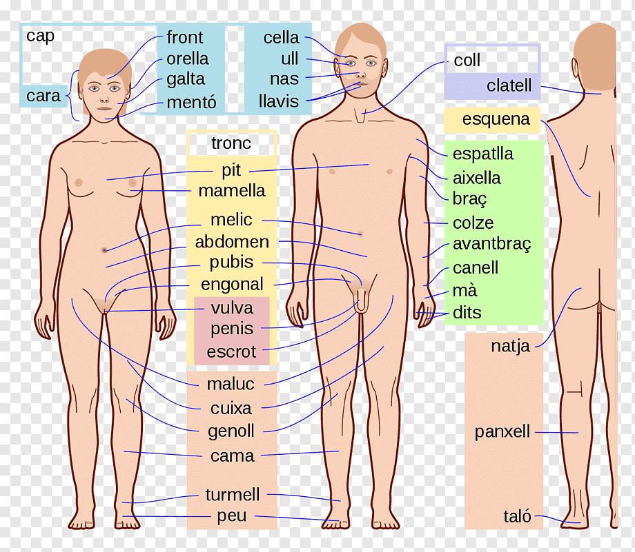 Деятельность человека в обществознании (6 класс), виды и стурктура